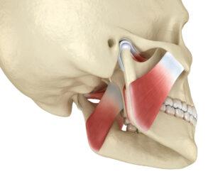musculos principales de la masticación